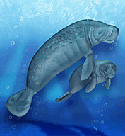 West Indian Manatee | Zoo Tycoon Wiki | FANDOM powered by Wikia