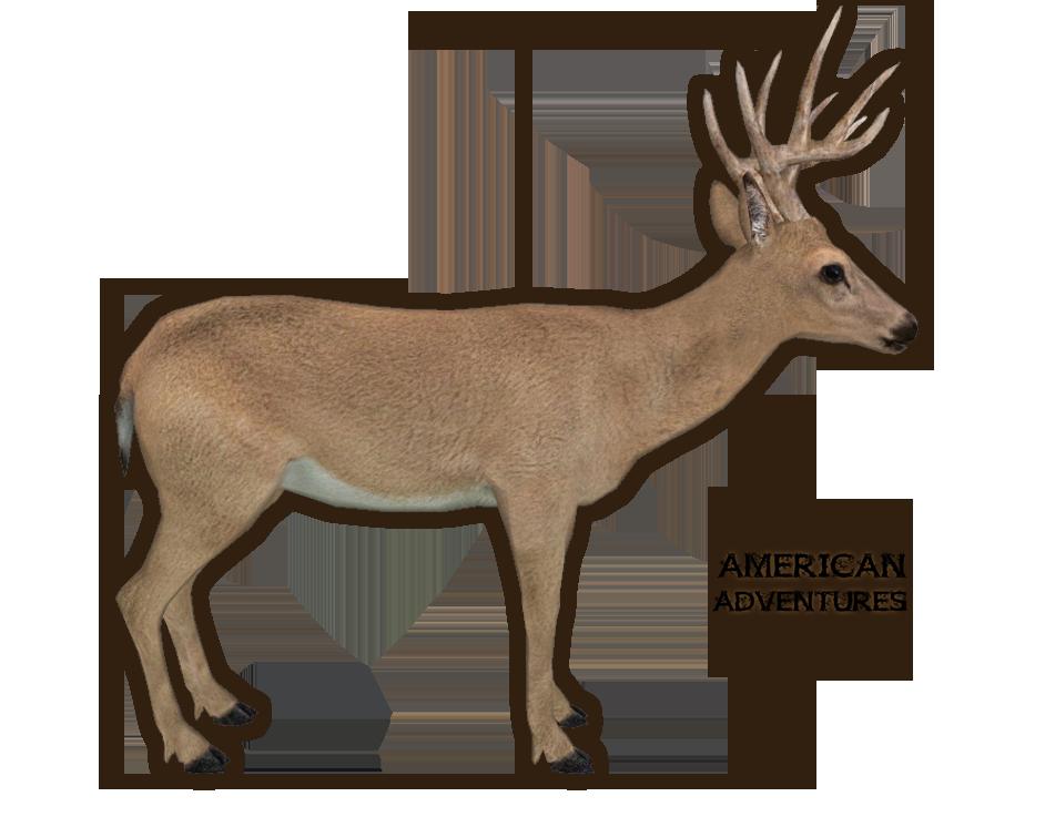 key deerpng - Reindeer Images 2