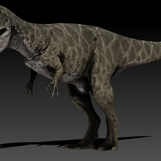 <i>Carcharodontosaurus</i>