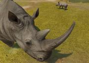 Northern-white-rhinoceros-ztuac
