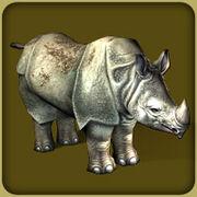 Javan Rhinoceros2