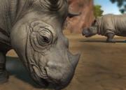 Sumatran-rhinoceros-ztuac