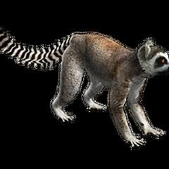 Ring-tailed lemur remake.