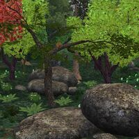 Preview temperateforest