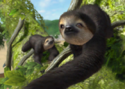 Pale-throated-three-toed-sloth-ztuac