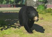 Sun-bear-ztuac