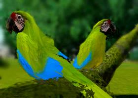 File:Great-green-macaw-ztuac.png