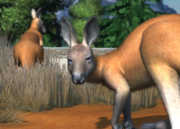 Red-kangaroo-ztuac