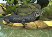Black-caiman-ztuac