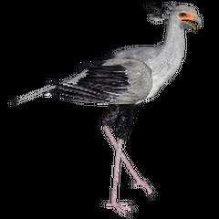 Secretary Bird remake.