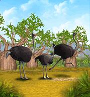 Ostrich-0