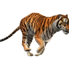 The Siberian Tiger featured in the Winter magic pack.