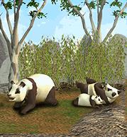 ZT1 - Giant Panda