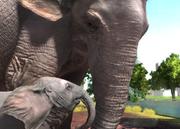 Bornean-elephant-ztuac