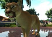 Eastern-south-american-cougar-ztuac