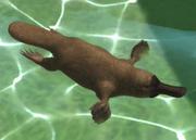 Platypus-ztuac