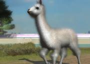Huacaya-alpaca-ztuac