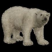 Polar.Bear.AD