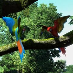 Military (Left) and Scarlet (Right) Macaw