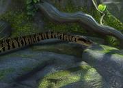 False-water-cobra-ztuac