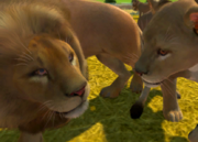 Katanga-lion-ztuac