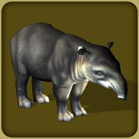 Bairds Tapir