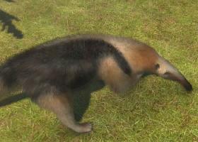 Northern Tamandua | Zoo Tycoon Wiki | FANDOM powered by Wikia