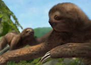Brown-throated-three-toed-sloth-ztuac