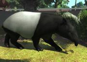 Malayan-tapir-ztuac