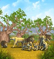 ZT1 Lion AnimalFacts