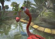 American-flamingo-ztuac