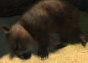 Common-wombat-ztuac