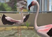 Lesser-flamingo-ztuac