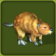 BeaverAmerican AdultF