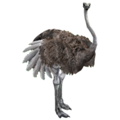Southern Ostrich remake (female).