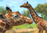 Reticulated-giraffe-ztuac