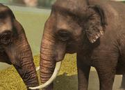 Sri-lankan-elephant-ztuac