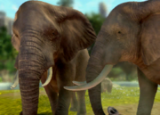 African-bush-elephant-ztuac