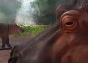 Hippopotamus-ztuac