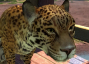 Central-american-jaguar-ztuac