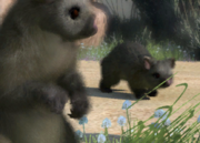 Common-brushtail-possum-ztuac