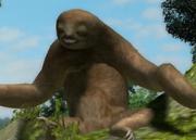 Maned-three-toed-sloth-ztuac