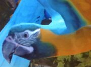 Blue-throated-macaw-zt