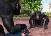 Eastern-chimpanzee-ztuac