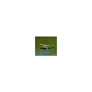 Baby Herrerasaurus