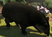 Bairds-tapir-ztuac