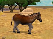 Quagga in game