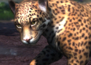 Peruvian-jaguar-ztuac