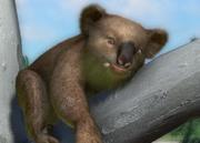 Victorian-koala-ztuac