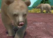 Kermode-bear-ztuac